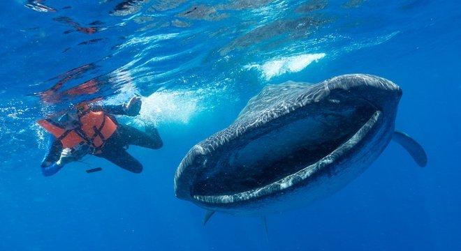 Estima-se que algumas baleias podem ingerir centenas de fragmentos diariamente