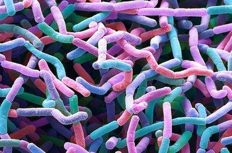 Nova família de antibióticos foi batizada de 'maladicin'