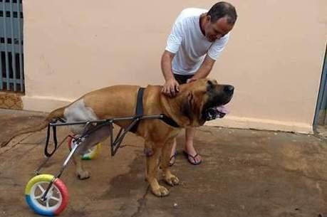 Souza fabrica cadeiras para animais de todos os tamanhos