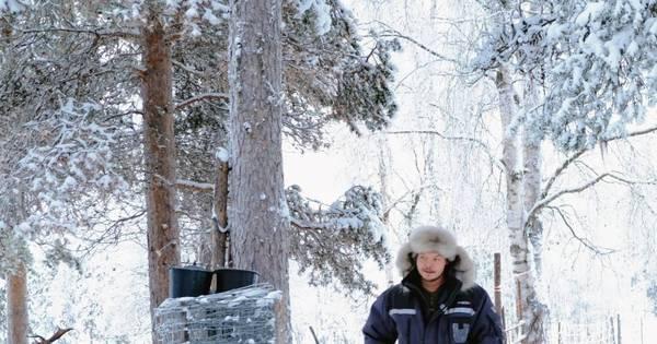 Mudança do clima ameaça criação de renas na terra do Papai Noel