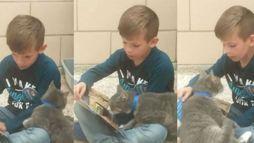 Amor e solidariedade: menino vai a abrigo ler para gatinhos abandonados ()