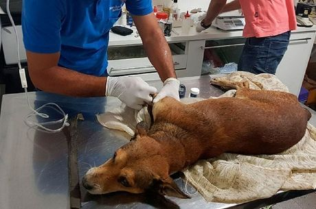 Segundo os vizinhos, os proprietários do animal viajaram e deixaram-no no imóvel