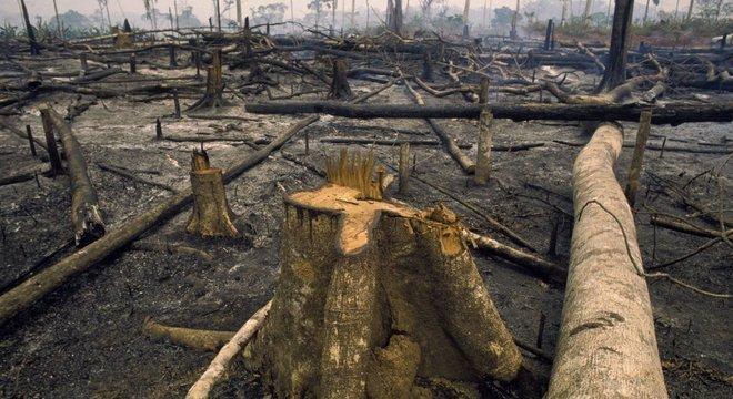 5s0thyru0h jzcgpjk0m file?dimensions=660x360 - Áreas de conservação desmatadas na Amazônia estão perdendo proteção do governo, aponta estudo nos EUA