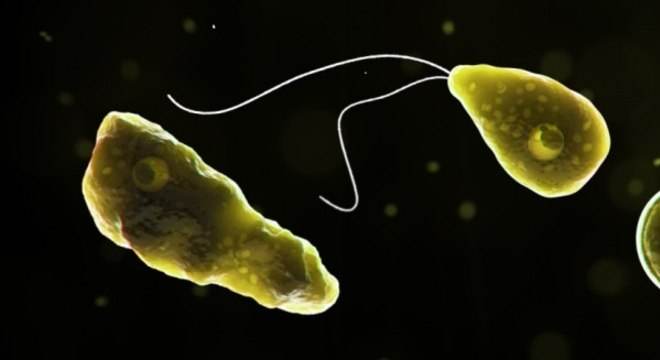 A ameba Naegleria fowleri entra pelo nariz e se instala no cérebro