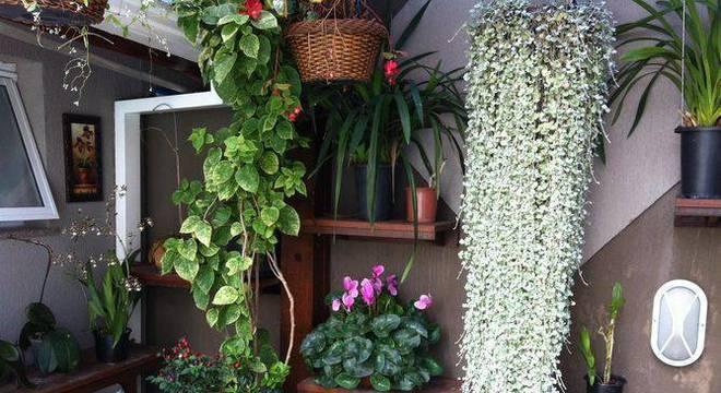30448- jardim pequeno -eder-mattiolli-viva-decora