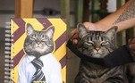 O perfil Cansei de ser Gato (@canseidesergato) é o lugar ideal para os amantes dos felinos. O gato Chico compartilha sua rotina como