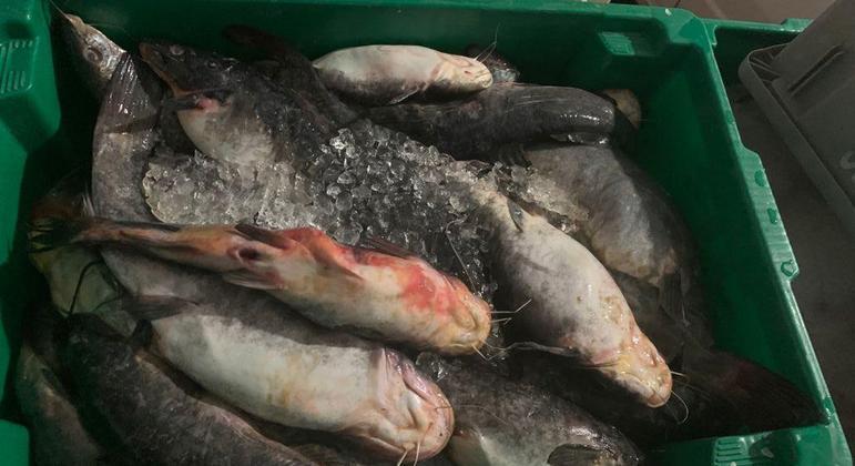 A ação é contra  esquema de fraude fiscal no ramo atacadista de pescados