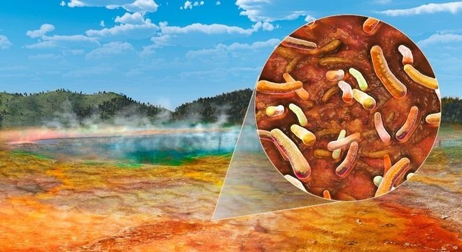 A bactéria que Brock chamou de Thermus aquaticus sobrevive a altas temperaturas