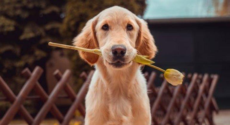 A educação é fundamental para que os cachorros possam viver em harmonia com todos nos ambientes.