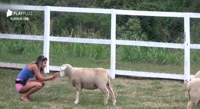 Hari ficou emocionada ao acariciar as ovelhas da sede