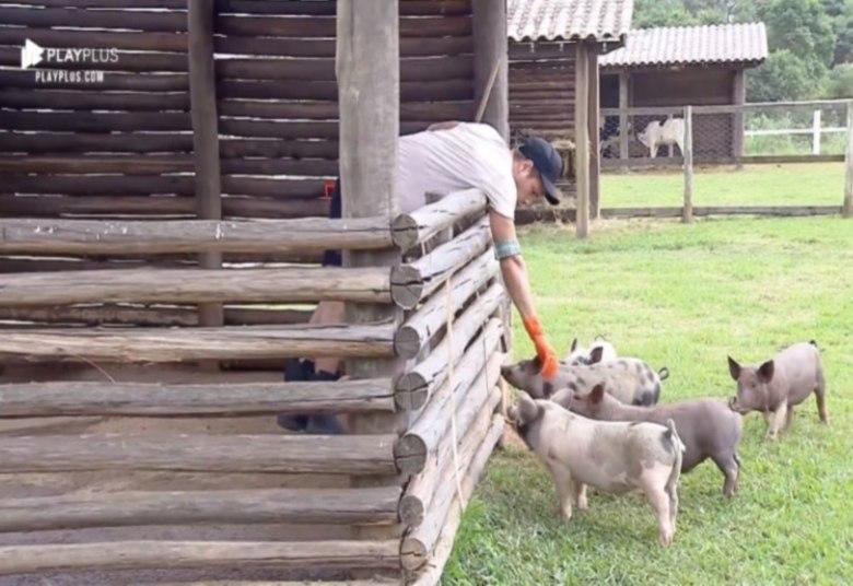 Guilherme soube muito bem como encarar a fúria dos porquinhos
