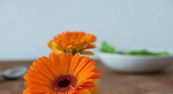 A flor de gérbera laranja traz alegria para o ambiente