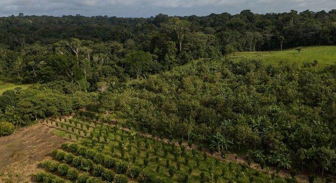 A foto mostra um Sistema Agroflorestal dentro da reserva Chico Mendes, no estado do Acre, e, ao fundo, uma floresta