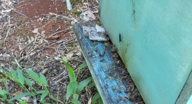 A morte dos insetos aconteceu na semana passada Crédito: Andressa Sperling / Divulgação / CP