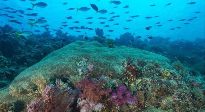 Palau proibiu o uso de protetores solares, produtos que impactam negativamente a vida marinha e também os recifes de coral