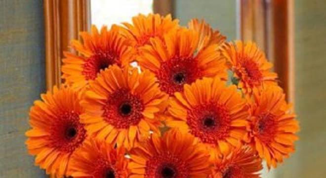 A união de várias gérberas em tom laranja formam um lindo arranjo