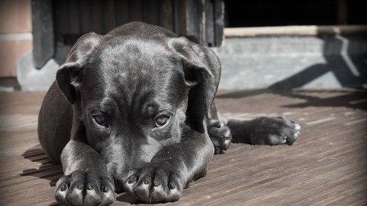 Número de animais abandonados pela família cresce durante as férias (Pixabay)