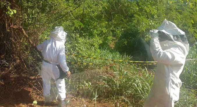 Local do ataque das abelhas foi isolado e colmeia não foi localizada