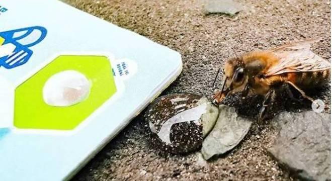 Britânico cria cartão para alimentar e salvar vidas de abelhas