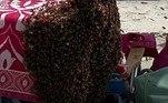O profissional levou aproximadamente 15 minutos para coletar as abelhas e colocá-las em uma caixa de papelão