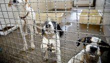 Adoção e abandono de animais aumentam durante a pandemia