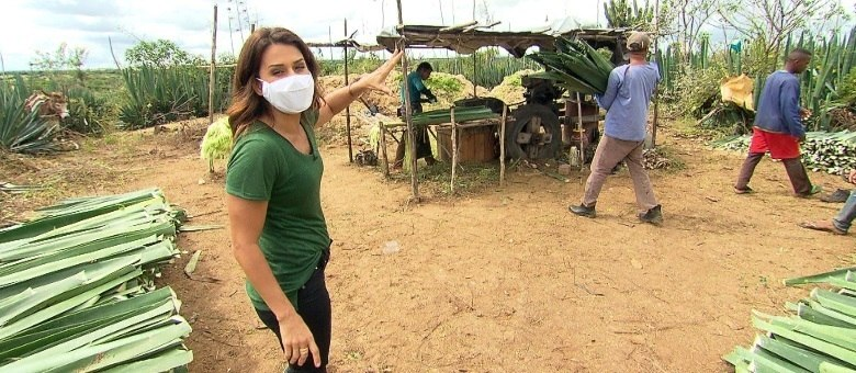 Adriana Araújo mostra o trabalho desumano nas lavouras de sisal no semiárido nordestino
