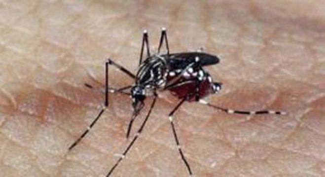O mosquito Aedes aegypti causou mais de 8 mil casos esse ano em SP
