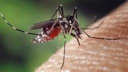 Com epidemia em três Estados, dengue cresce mais de 200% no país  (Pixabay)