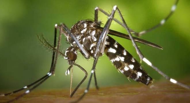 Dengue na gestação pode causar anomalia no bebê