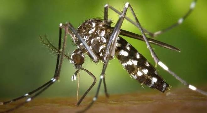 O mosquito Aedes aegypti é transmissor da zika e também da febre do Rift Valley