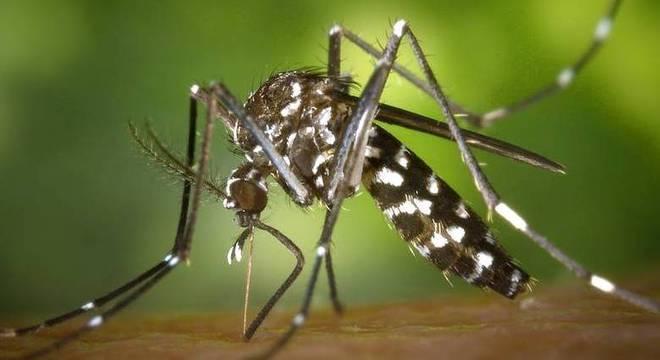 Os números confirmam que o a infestação de Aedes aegypti é uma ameaça global