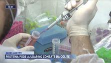 Aedes aegypti: proteína pode ajudar no combate da colite