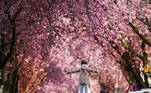 A girl poses under blooming cherry trees at the Heerstrasse street in Bonn, western Germany on April 9, 2021. The cherry blossom street in Bonn became famous after photographers started posting pictures of it on the web in the 1980s. INA FASSBENDER / AFP