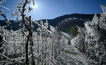 Water is sprayed over apple trees in order to cover them with a layer of ice to protect blossoms from the frost, at their orchard in La Palazzetta, a village located some 100km from Milan, on April 8, 2021. The ice coat is supposed to protect the delicate blossoms from cold temperatures and spring freezes that have hit Italy in the last two days.  Piero Cruciatti / AFP
