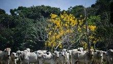 Rússia proíbe importação de carne bovina de Minas e Mato Grosso