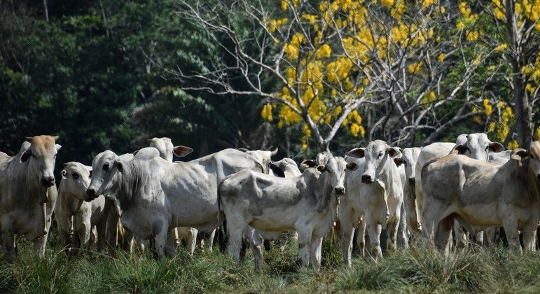 Rússia proíbe importação de carne de Minas Gerais e Mato Grosso