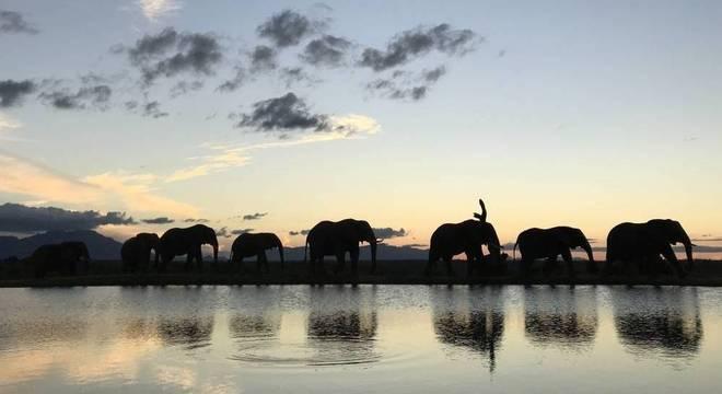 A África do Sul proporciona surpresas inesquecíveis