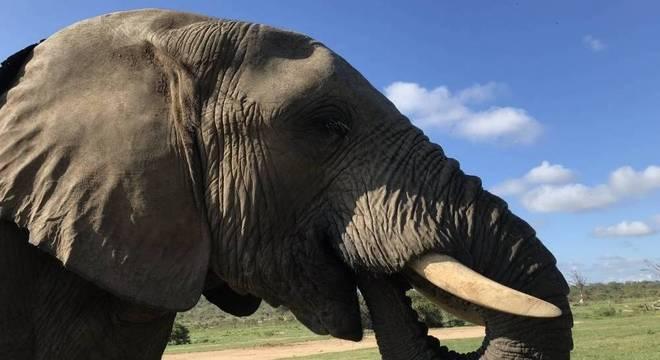 Ficar tão próximo do um elefante é uma experiência indescritível