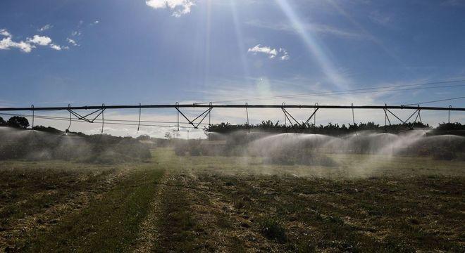 Produção agropecuária bate recorde