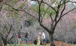 Início da floração das cerejeiras no Parque do Carmo, zona leste da capital. Publicado em 09/08/2021 08:48  Foto: Rovena Rosa/Agência Brasil  Local: São Paulo-SP
