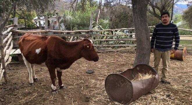 O fazendeiro Aldo Norman diz que seus animais 'estão morrendo' em virtude da seca