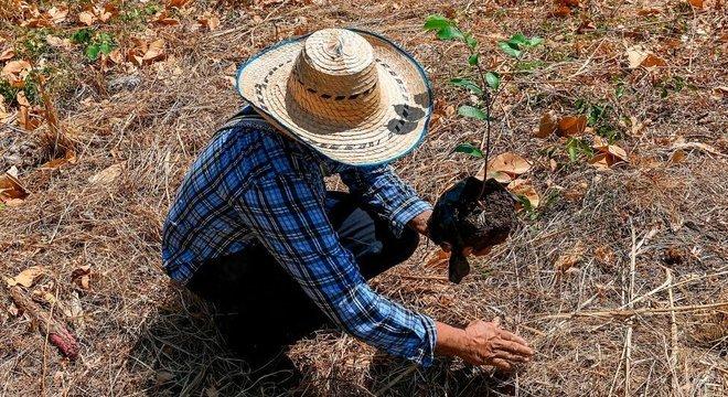 Agricultor plantando un árbol