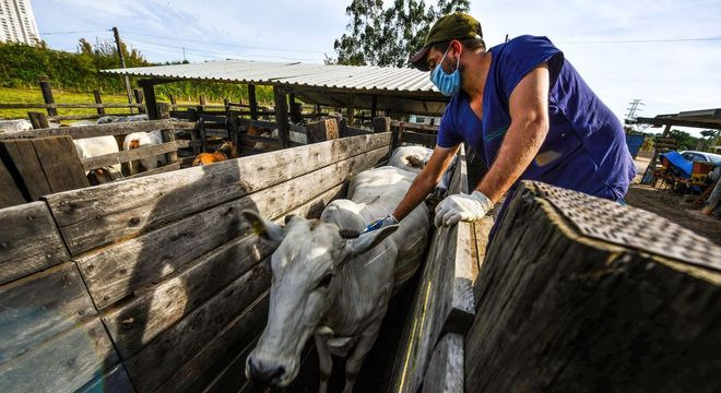 Gado de corte na zona rural da cidade de São José dos Campos é vacinado