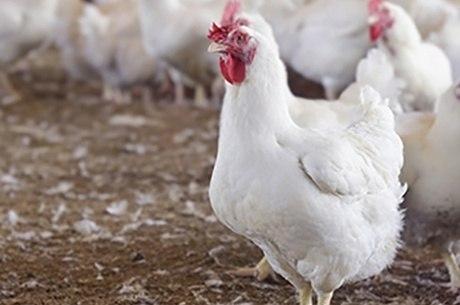 Brasil embarcou 4,212 milhões toneladas de frango