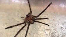 Rapaz consome água de chaleira e descobre ter 'bebido' aranha junto