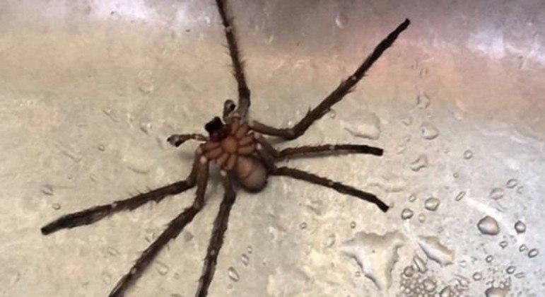 Rapaz descobriu aranha no fundo de chaleira após ter consumido água fervida no recipiente