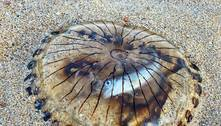 Imagem chocante mostra peixe assustado dentro de água-viva