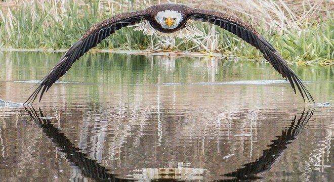 Steve Biro fez registro de águia-de-cabeça-branca em santuário de aves de rapina no Canadá
