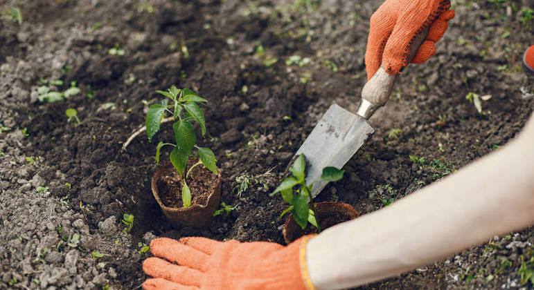 A compostagem é uma forma de exercer a cidadania ambiental