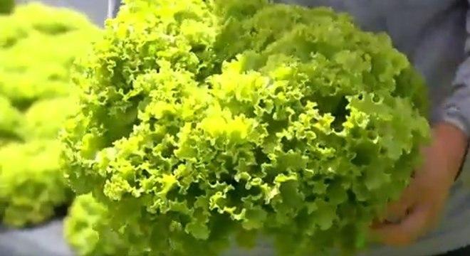 A ingestão de verduras cruas expõe ao risco de contrair toxoplasmose